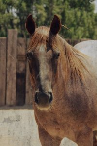 "Rosie, who ""adopted"" Star after Miracle died."