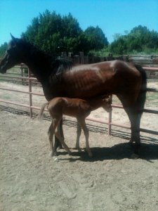 Miracle and Star as a newborn