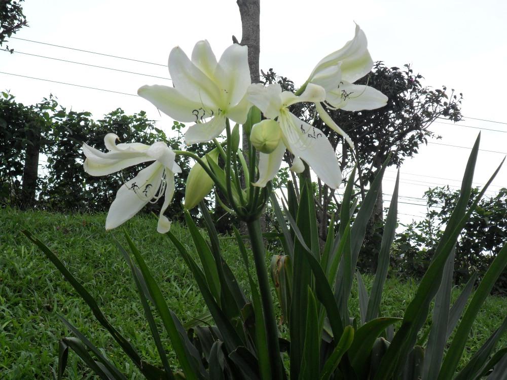 Costa Rica:  4, Flora  (2/6)