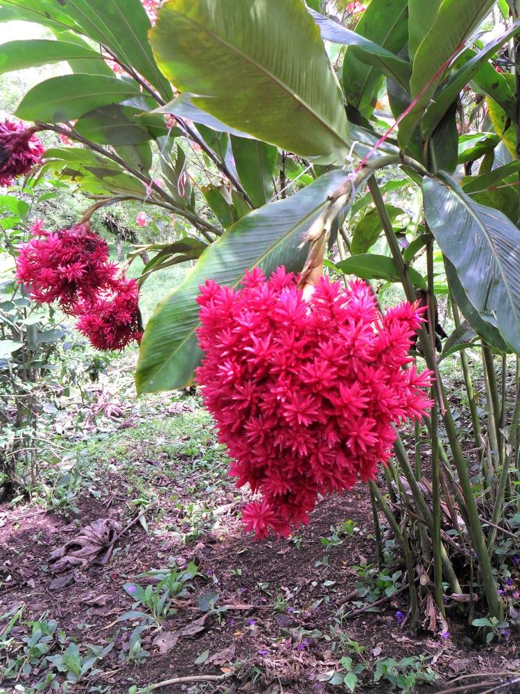 Costa Rica:  4, Flora  (5/6)