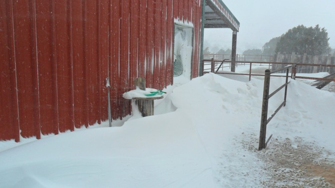 The barn door before I shoveled my way in.