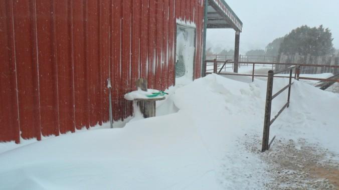 The barn door before I shoveled my way in.