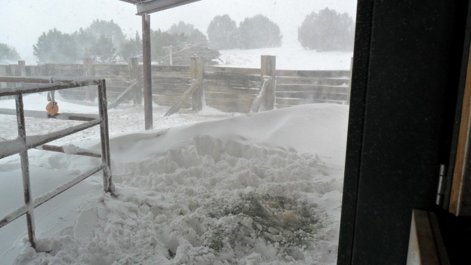 The view out the double barn door.  All this is actually under a roof.  The wind is blowing the snow everywhere.