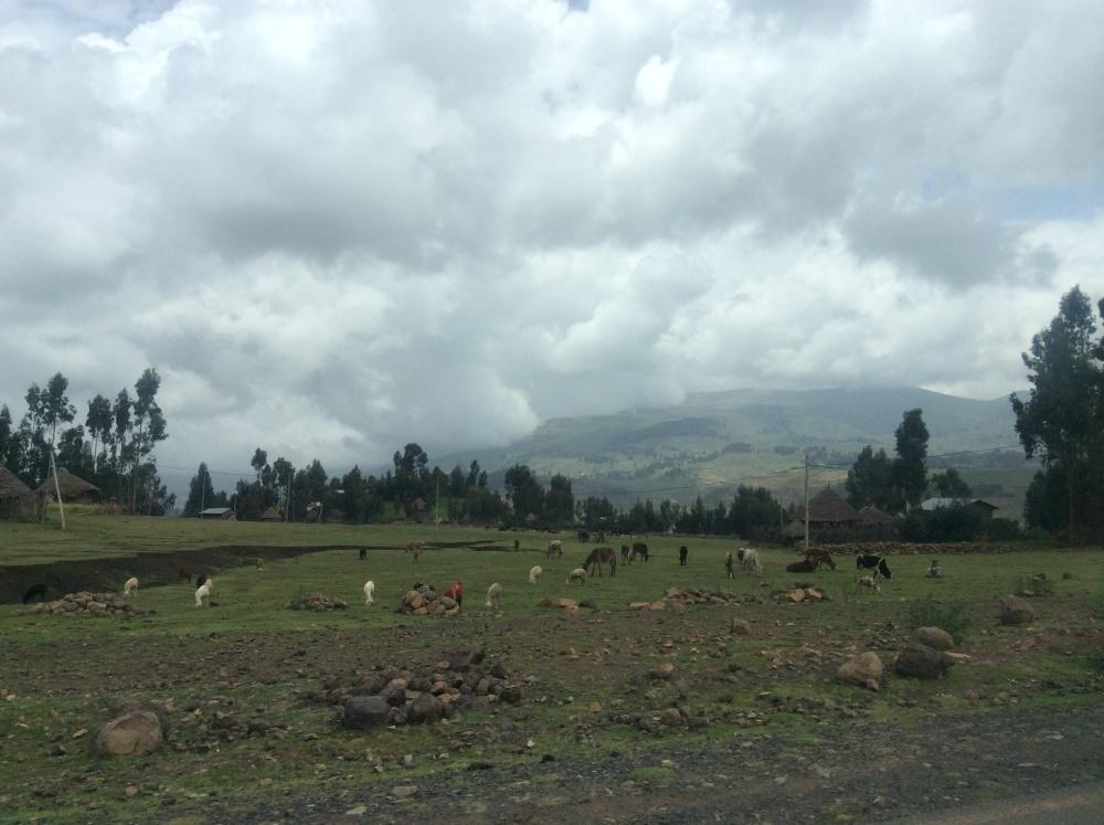 Ethiopia--2 (3/6)