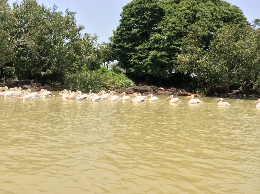Ethiopia--Lake Tana and the Blue Nile (4/6)
