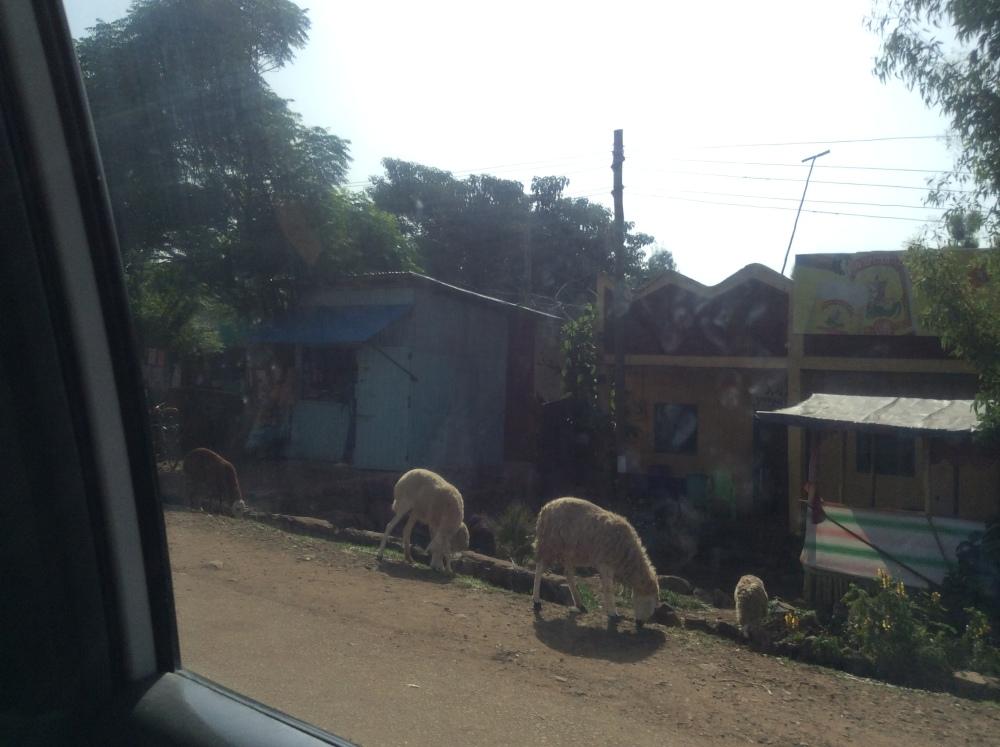 My Ethiopian Adventure:  Lake Tana, Where the Nile Begins--Part One (2/6)